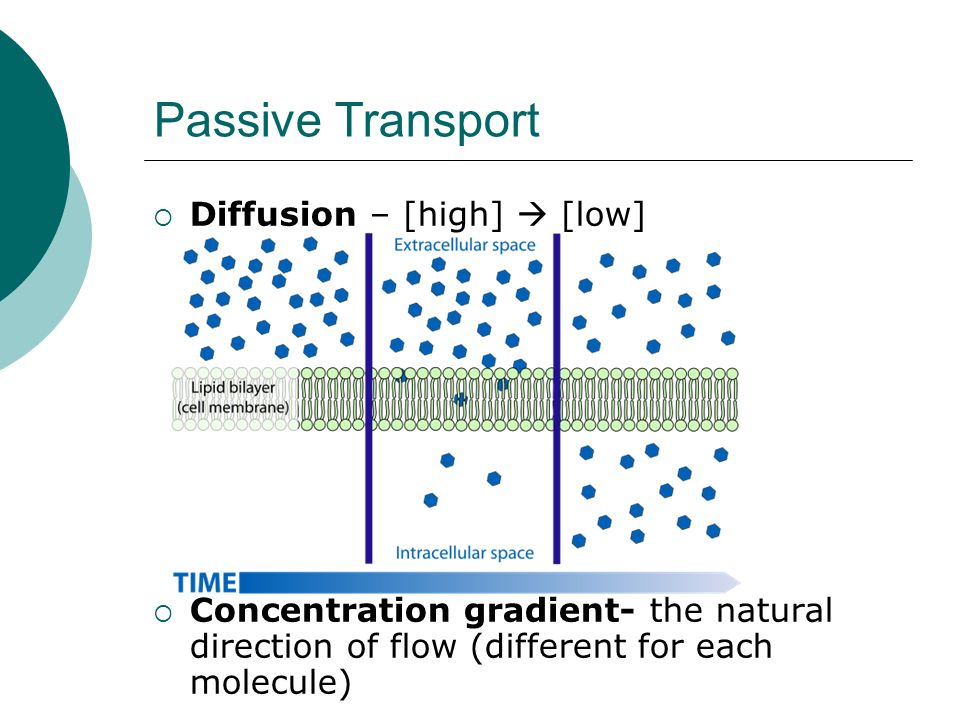 Passive Transport Diffusion – [high]  [low]